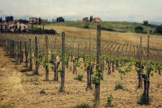 Tuscany Wine & Country Tour